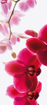 Orchidea Fototapeta