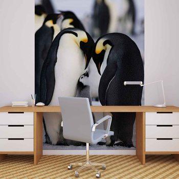 Pingwinia rodzina Fototapeta