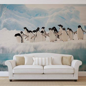 Pingwiny Fototapeta