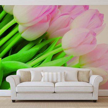 Fototapeta Příroda, květiny, tulipány