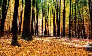 Fototapeta  Příroda - Les - Podzim