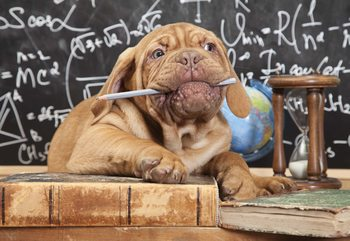 Puppy Professor Fototapeta