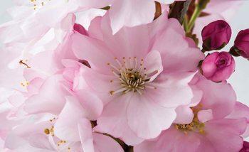 Różowe kwitnące wiosenne kwiaty Fototapeta