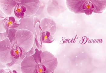 Różowe storczyki Fototapeta