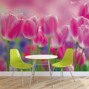 Różowe tulipany Fototapeta