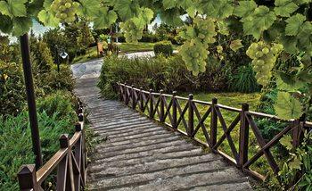 Ścieżka wśród winogron Fototapeta