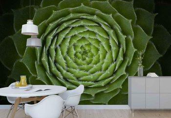 Fototapeta Succulent