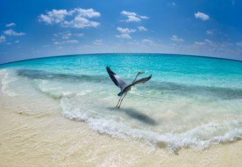 Take-Off Fototapeta
