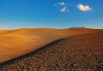 Fototapeta Tuscan Fields