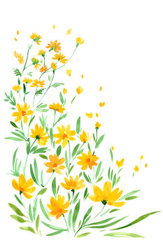 Fototapeta Yellow watercolor wildflowers