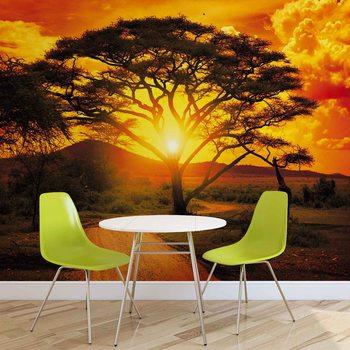 Zachód słońca nad afrykańskim drzewem Fototapeta