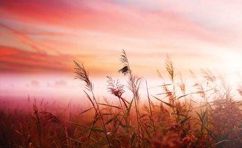 Zachód słońca nad polem Fototapeta
