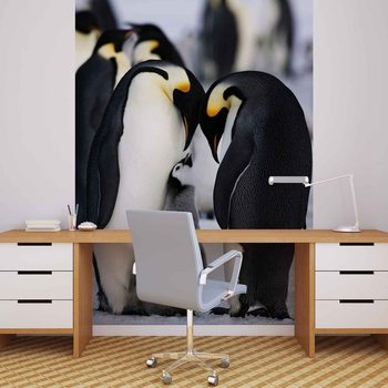 Fototapeta Zvířata Penguin