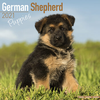 Ημερολόγιο 2021 German Shepherd