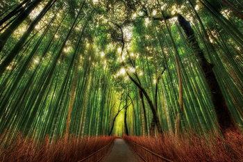 Glasbilder Bamboo Forest - Straight Path