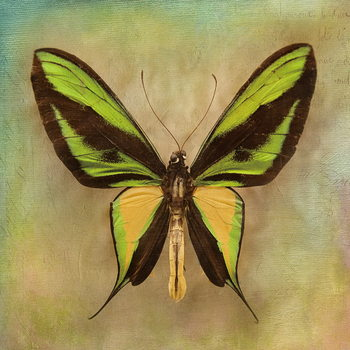 Glasbilder Butterfly - Green