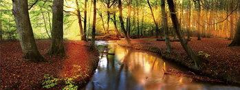 Glasbilder Colorful Forest