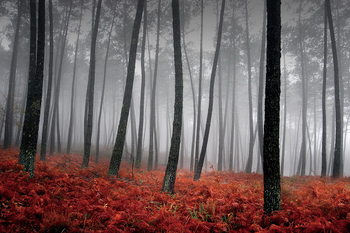 Glasbilder Forest - Red Leaves