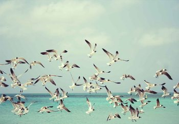 Glasbilder Vintage Seagulls