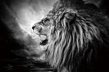 Принт стъкло Lion - Lion at Night