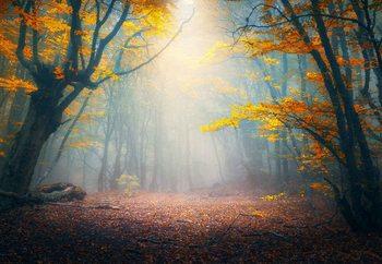Принт стъкло The Enchanted Forest