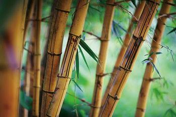 Glasschilderij Bamboo - Fresh Nature
