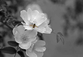 Glasschilderij  Bee Blossom