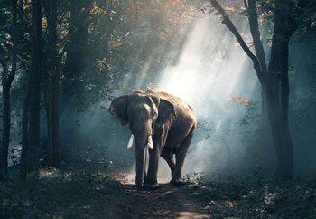 Glasschilderij Elephant Path