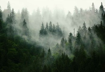 Glasschilderij Misty Forest