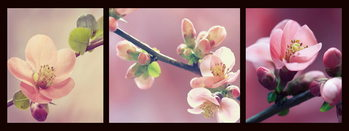 Glasschilderij Pink World - Pink Orchid