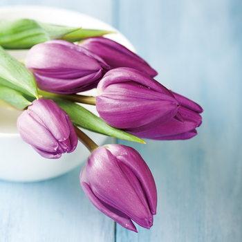 Glasschilderij Purple Tulipans