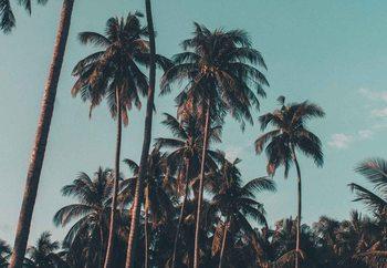 Glasschilderij Retro Palms
