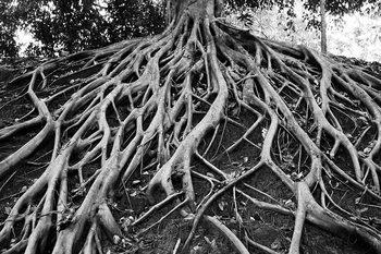 Glasschilderij Tree - Black and White Roots