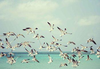Glasschilderij Vintage Seagulls