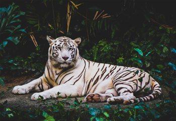 Glasschilderij White Tiger