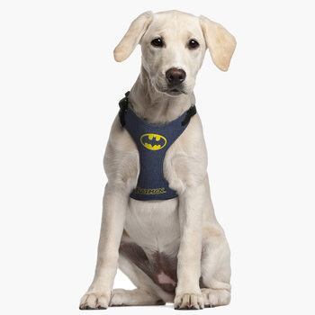 Harnais pour chien Batman
