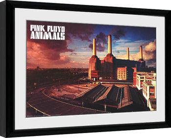 Innrammet plakat Pink Floyd - Animals
