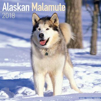 Kalendář 2021 Aljašský malamut