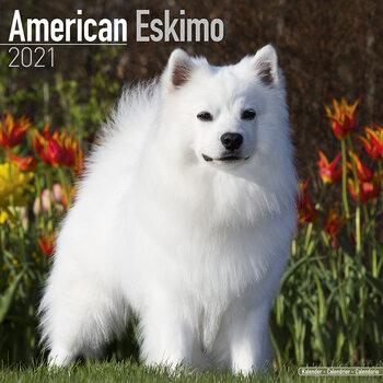 Kalendář 2021 Americký Eskymácký Pes