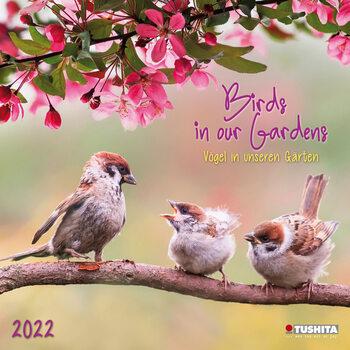 Kalendár 2022 Birds in our Garden