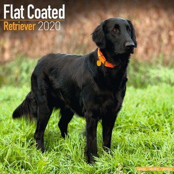 Kalendář 2021 Flat Coated Retrívr