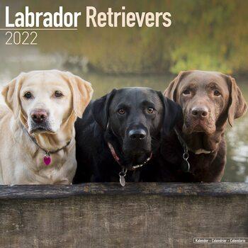 Kalendár 2022 Labradorský retríver  - Mix