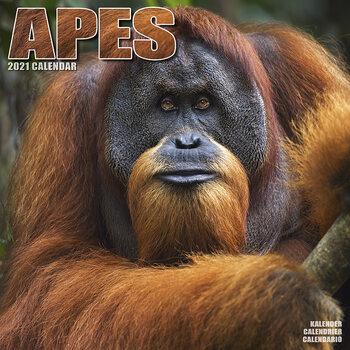Kalendář 2021 Opice
