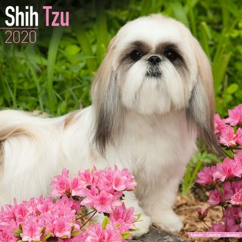 Kalendář 2021 Shih Tzu