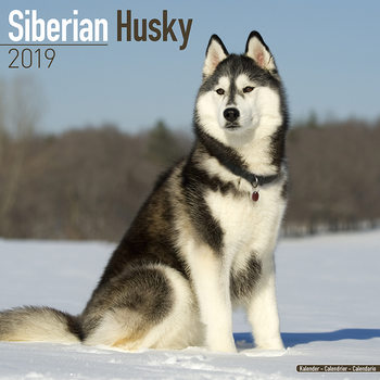 Kalendář 2021 Sibiřský Husky