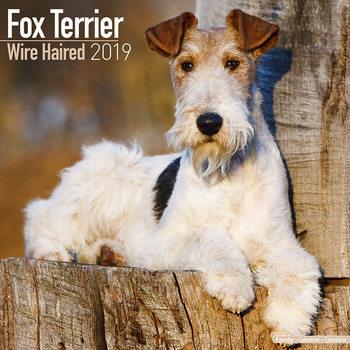 Kalendář 2021 Wirehaired Fox Terrier