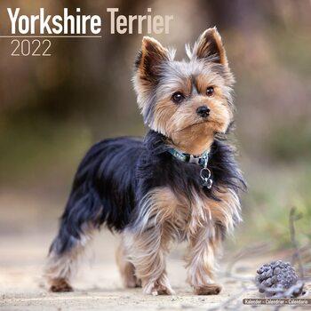 Kalendár 2022 Yorkshirský Teriér