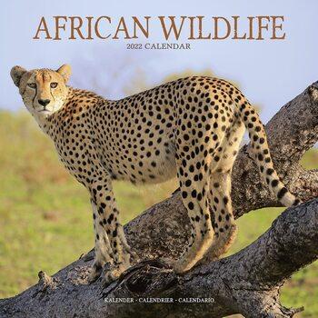 Kalendář 2022 African Wildlife
