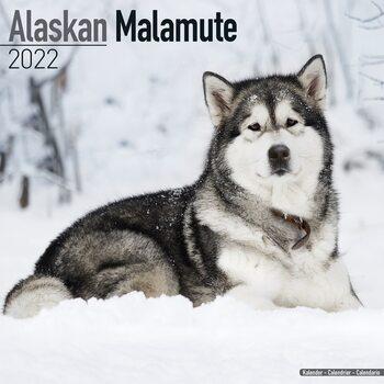 Kalendář 2022 Aljašský malamut