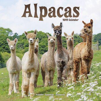 Kalendář 2022 Alpaky